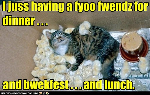breakfast,captions,Cats,chicken,chicks,dinner,friends,lunch,pun