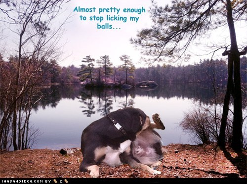 dogs,licking,what breed,balls,scenery,lake,Forest