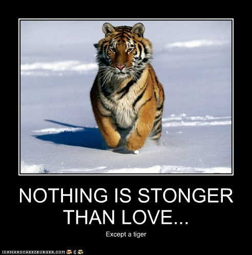 tiger running stronger love advice wisdom - 6601798656