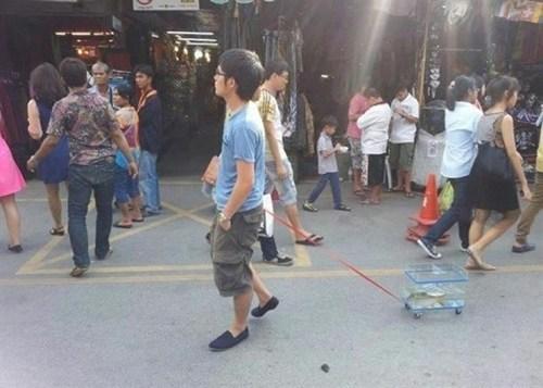 fish pet walking the dog - 6601912320