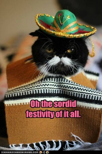 captions Cats ennui festive mexico sombrero