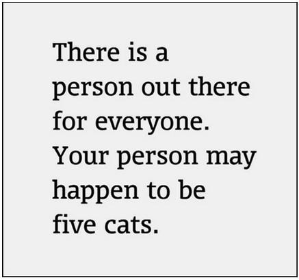 cat people Cats person for everyone - 6602296064
