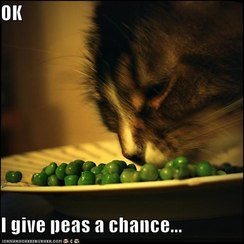 captions Cats classics international day of peace peace peas puns - 6602333184