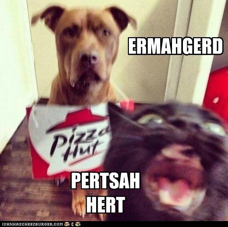 cat,Ermahgerd,goggie,pets,pizza hut