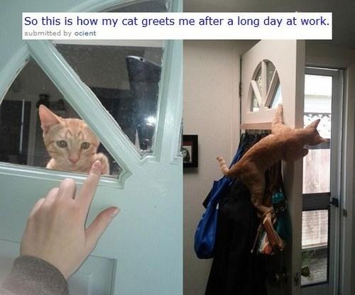 Cats climbing doors greeting hello windows wtf
