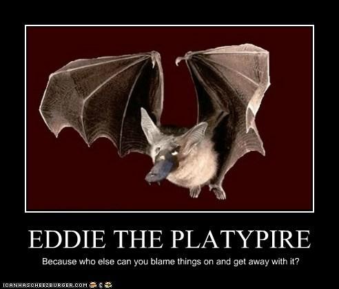 EDDIE THE PLATYPIRE