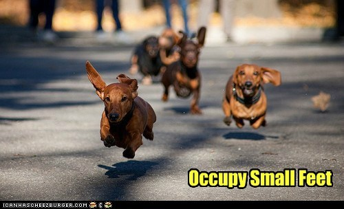 dogs occupy dachshund feet small running