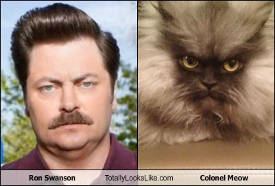 actor,cat,celeb,colonel meow,funny,Nick Offerman,ron swanson,TLL