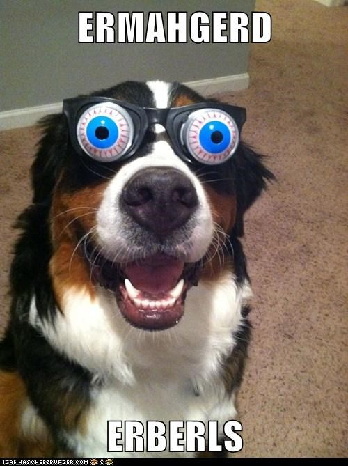 dogs Ermahgerd eyeballs glasses goggie - 6602659584