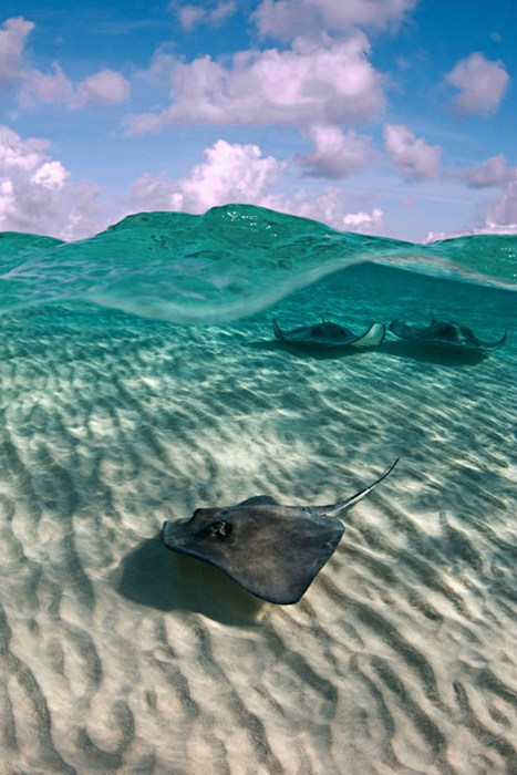 beach,photography,sting ray