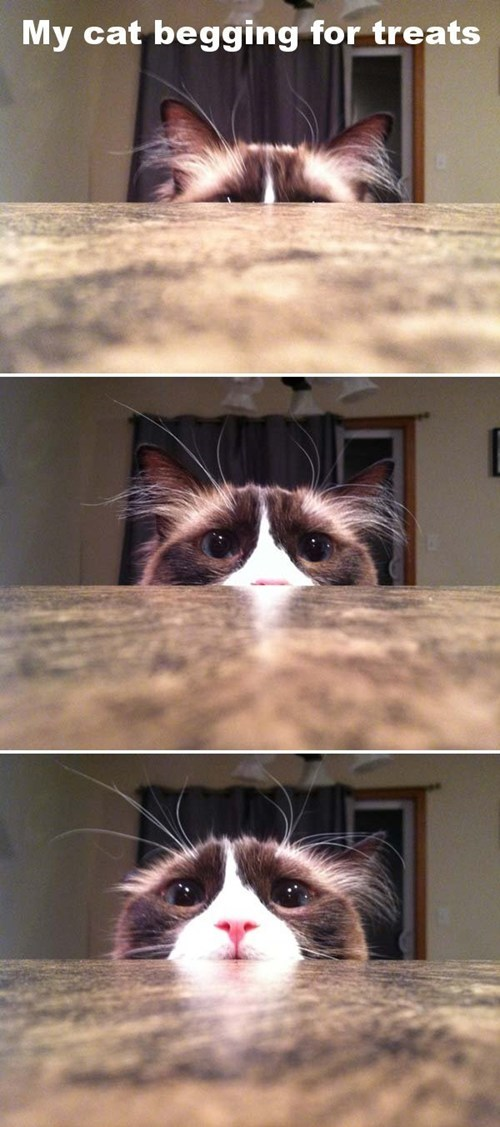 begging captions Cats hiding multipanel peeking treats want - 6602702592