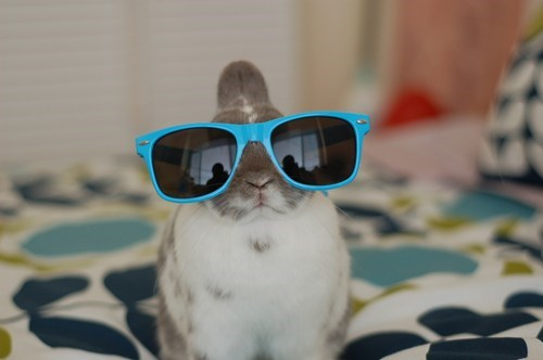 bunny cool happy bunday hipster rabbit sunglasses - 6602716928