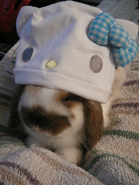 bunny,happy bunday,hat,hello kitty,rabbit