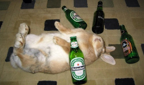 beer bottle bunny happy bunday hung over partying rabbit - 6602744064