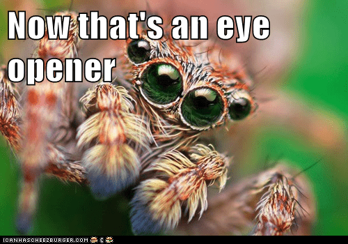 spider eyes expression fascinated - 6602834432