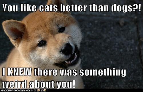 dogs you're weird shiba inu - 6602961664