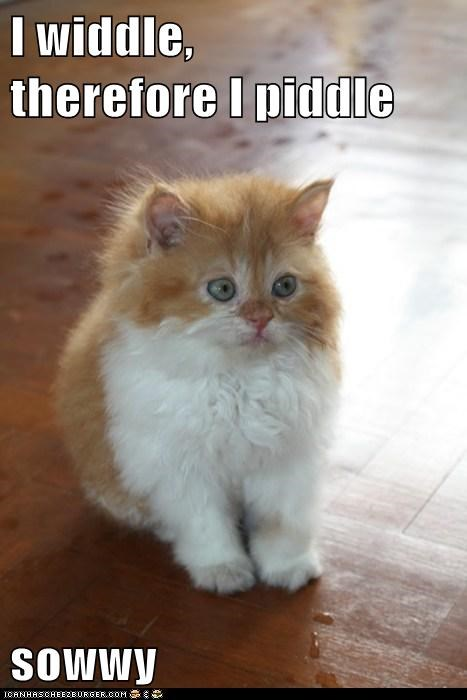 sorry pee small little Cats captions - 6603980800