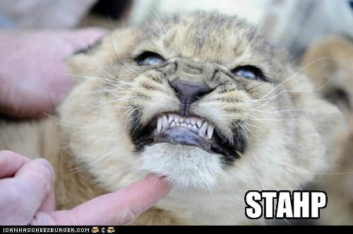 stahp finger smile annoyed lion cub