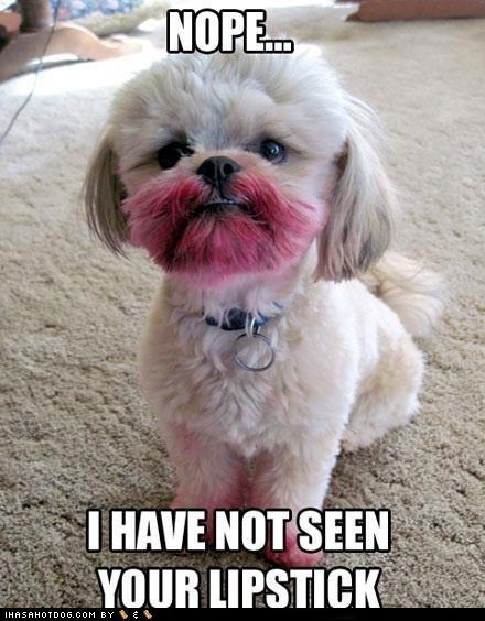 dogs,dye,lipstick,lhasa apso