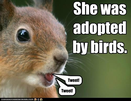squirrel,adopted,birds,tweet,flying