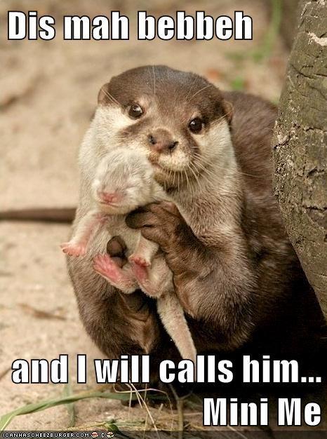 mini me austin powers baby otters name - 6604614656