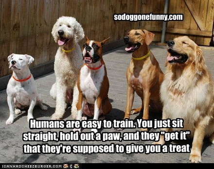 """Humans are easy to train. You just sit straight, hold out a paw, and they """"get it"""" that they're supposed to give you a treat sodoggonefunny,com"""