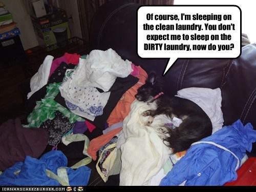 laundry dogs nap dirty laundry chihuahua sleeping - 6604732160