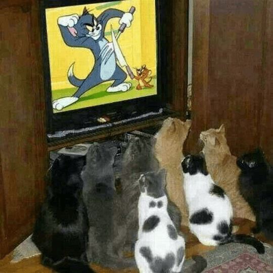 watching TV tv shows photos TV watching Cats - 6604805