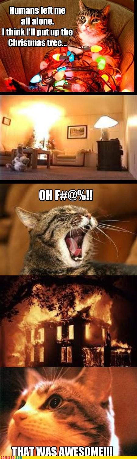 cat christmas dreaming fire humans
