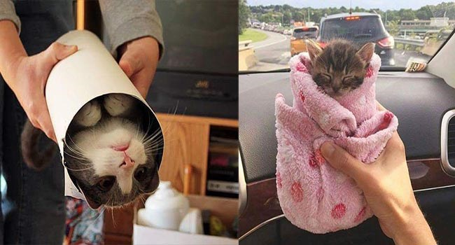 aww cute purrito cute photos Cats - 6605317