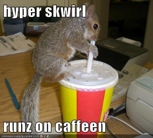 hyper squirrel caffeine runs drinking soda