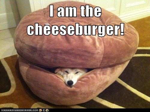 Cheezburger Image 6605410816