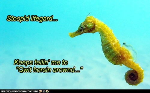 seahorse,lifeguard,stupid,angry,quit,horsing around,pun,swimming