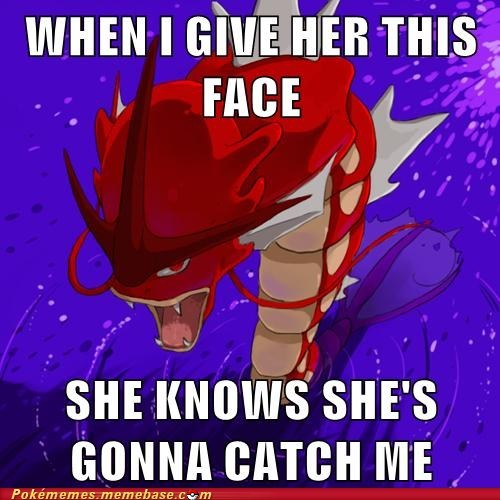gyarados if you know what i mean shiny - 6605629696