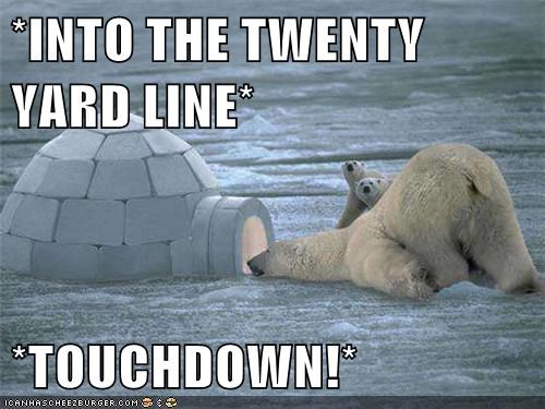 polar bear,football,watching,game igloo,touchdown