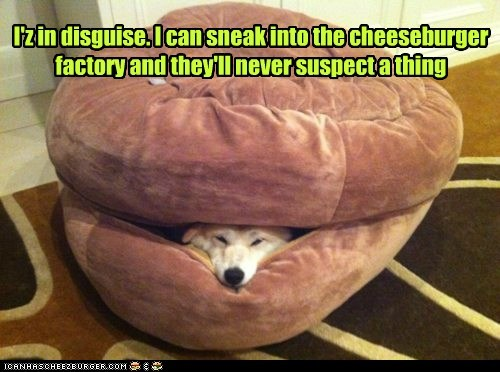 cheesburger,disguise,dogs,bean bag,sneaky