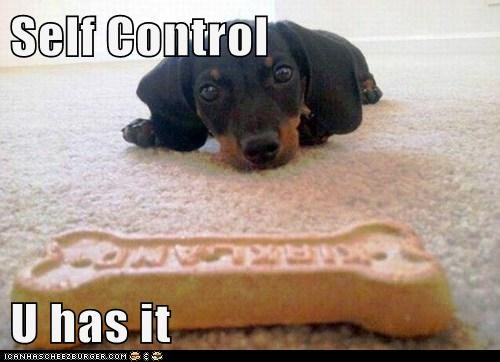 dog treat dogs puppy dachshund treat self control - 6606704384