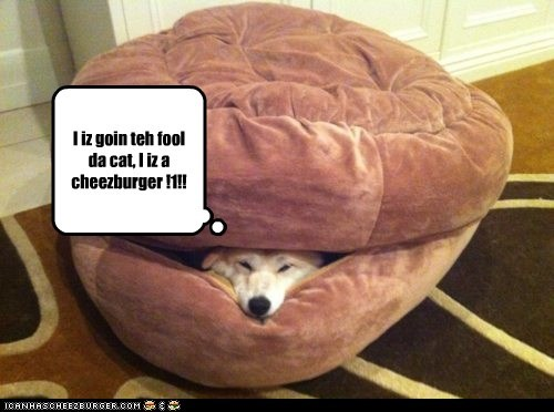 I iz goin teh fool da cat, I iz a cheezburger !1!!