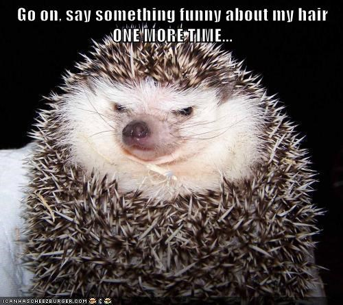 hedgehog spikey hair funny angry annoyed One More Time - 6606895104