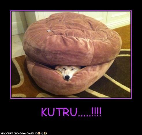 Cheezburger Image 6606895616