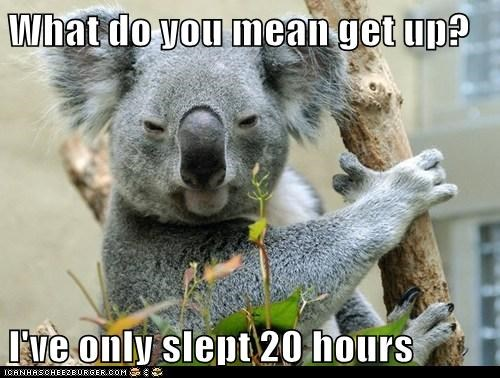koala,get up,what do you mean,angry,tired,hours