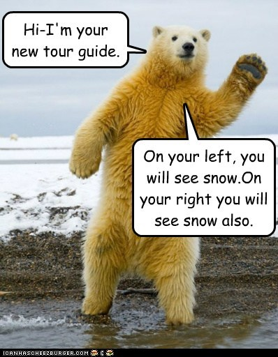 polar bear tour guide snow diversity wonderful same - 6607159552