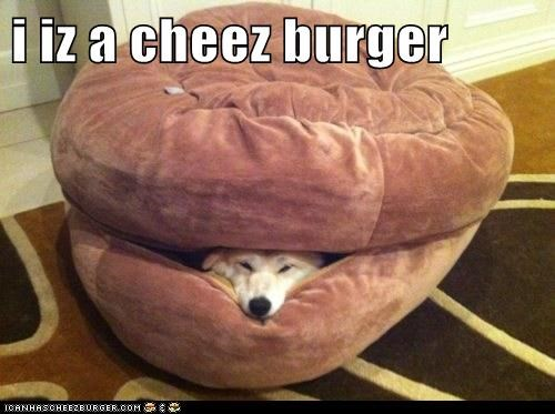 Cheezburger Image 6607351808