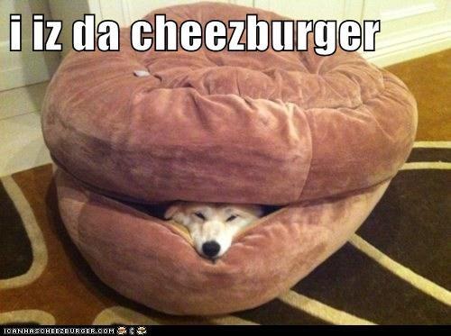 Cheezburger Image 6607524864