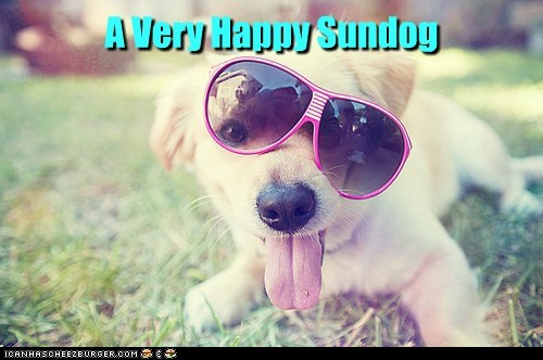 dogs labrador happy sundog sunglasses tongue Sundog