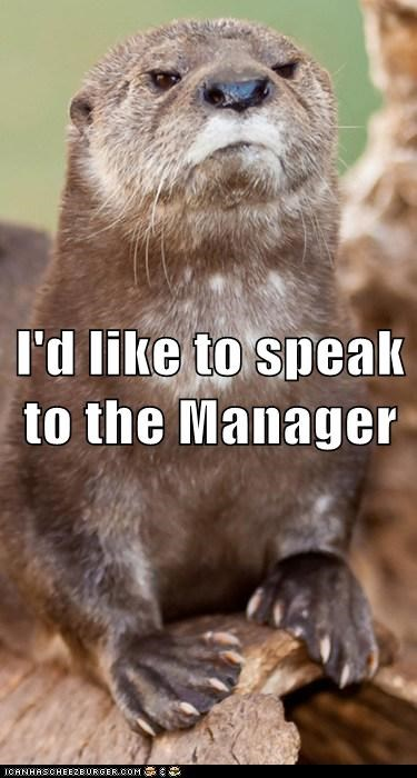 otter,angry,manager,customer,grumpy