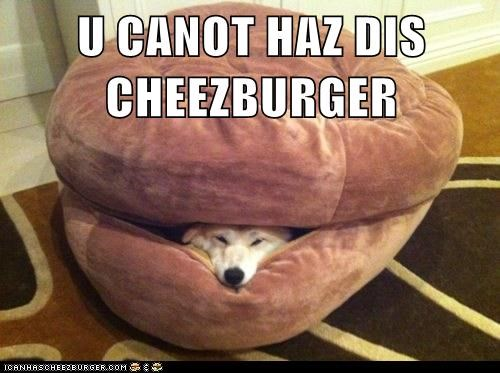 Cheezburger Image 6608000000