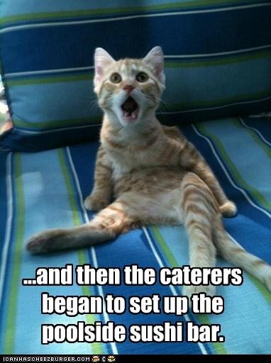 pool sushi Cats captions - 6608643072
