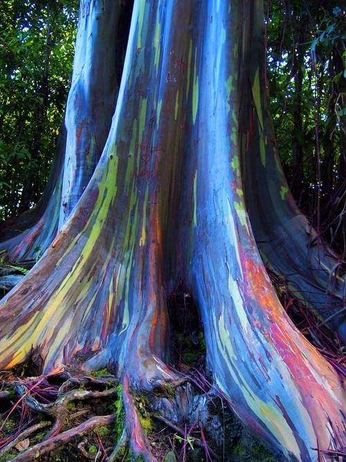 bark Earth Science eucalyptus multi-colored - 6608788224