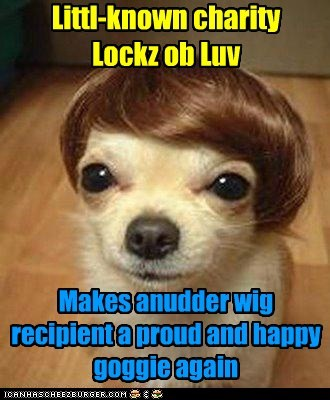 hair locks of love dogs charity confidence wig chihuahua - 6608810752
